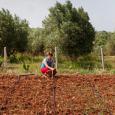 """""""Il mondo ha bisogno di una cultura alimentare che si basi su qualità e diversità. Soprattutto oggi, in un momento in cui gli alti costi ecologici, sanitari e sociali dell'agricoltura industriale stanno diventando sempre più evidenti"""". Così Vandana Shiva, ecologista di fama mondiale, introduce un suo intervento pubblicato su Huffingto Post e ripreso nelle newsletter di Banca Etica che condivide questi contenuti e parteciperà al dibattito che inizia ad farsi strada sui temi del cibo, del suolo e dell'agricoltura, temi che si intrecciano strettamente con l'economia e la finanza."""