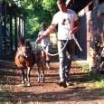 """Il maneggio """"La Bastide"""" di Busto Arsizio, in via Samarate al 150, organizza, delle giornate speciali per gli amanti dei cavalli. Per un giorno è possibile vivere le stalle, partecipare ad attività con i pony. […]"""