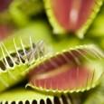 L' Oasi LIPU Palude Brabbia organizza domenica 22 Giugno un' escursione per far conoscere l' affascinante realtà delle piante carnivore.