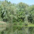 Tre appuntamenti di Legambiente Varese sul nostro territorio, di cui due nel prossimo week-end. Sabato 1° aprile dalle 14.30 alle 16.30 ai mulini di Guronesi terrà il secondo ed ultimo appuntamento con il corso di […]