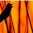 """Sabato 20 gennaio ore 21 Sala Montanari Varese ,Milko Marchetti,vincitore per ben nove volte consecutive dal 1999 della Coppa del Mondo di Fotografia Naturalistica, ci proporrà """"Emozioni Naturali"""", una serie di video proiezioni che come […]"""