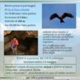 Questa domenica 6 maggio l'associazione guide Monte San Giorgio organizza In Volo sull'abisso un evento in collaborazione con il Gruppo Insubrico di Ornitologia che avrà lo scopo di unire l'attività di Birdwaching con la scoperta […]