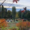 """Il """"foliage"""" autunnale, con le sue splendide tonalità, sta colorando in questi giorni Villa Toeplitz, un parco in cui tra poche settimane torneranno in funzione anche le fontane, finalmente rese efficienti e sostenibili grazie al […]"""