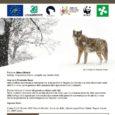 """La locandina dell'evento. Il Circolo Legambiente di Como vi invita ad una serata dedicata al lupo, uno dei grandi predatori, specie protetta, animale affascinante ed essenziale alla conservazione della biodiversità. L'incontro, intitolato """"Il ritorno naturale […]"""